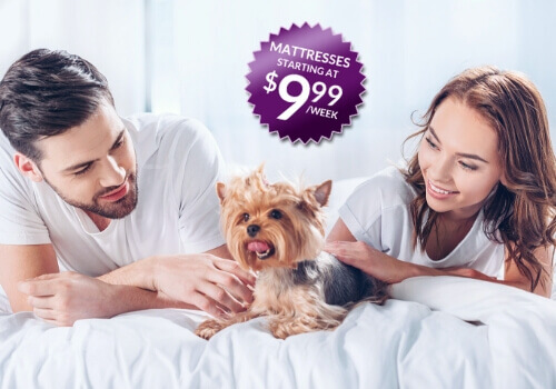 Stay in bed this New Years Day with Omni Mattress